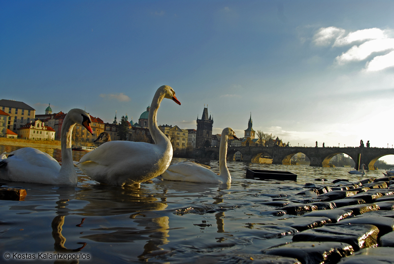 at Charles Bridge
