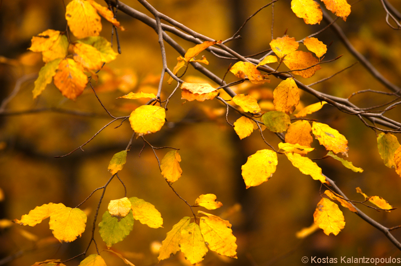 Automn leaves