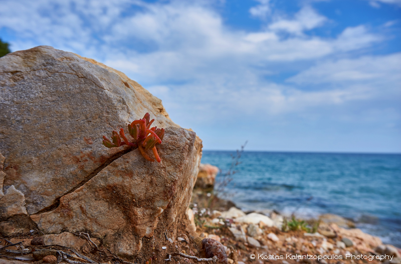 Rocky flower