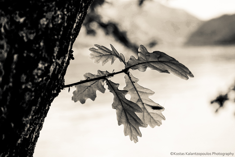 infrared leaves