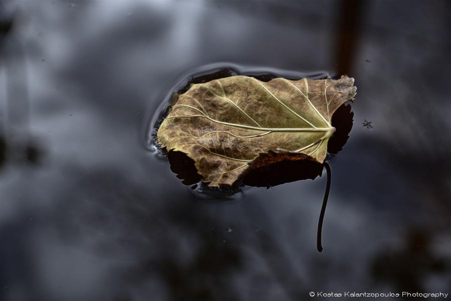 Floating leave