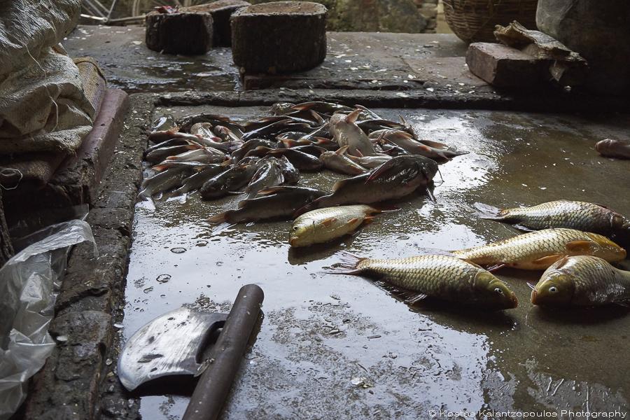 fish-market-15